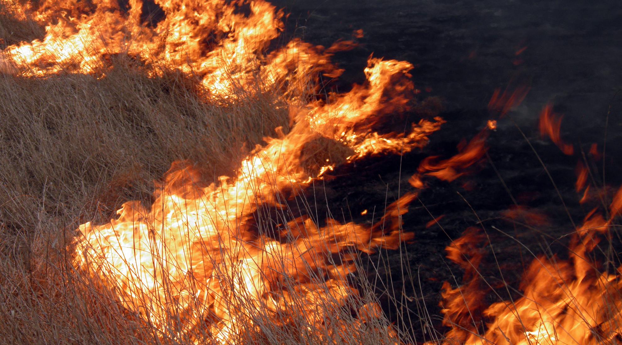 Мисливці проти спалювання трави