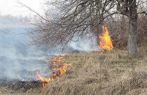 суха-трава-горить