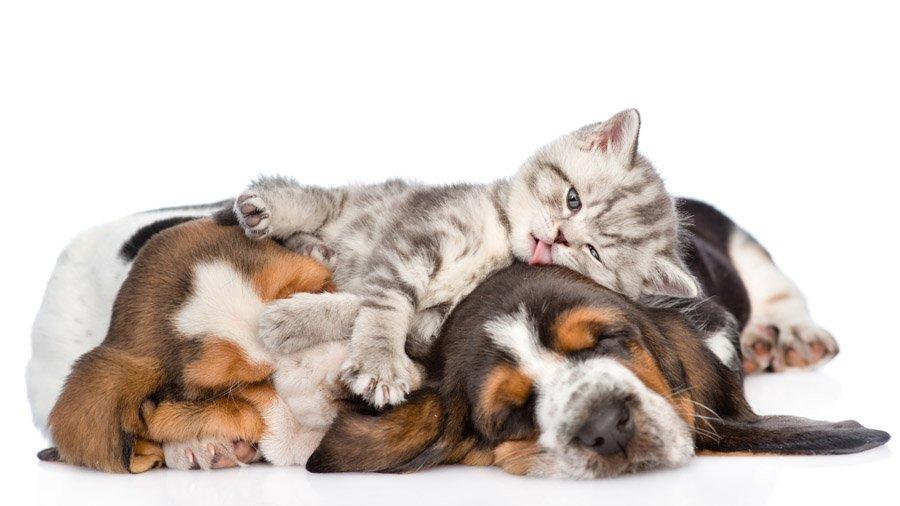 1481393296_basset-hound-dog-photo-2