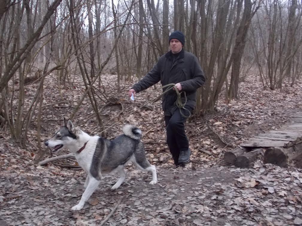 Волинь: змагання мисливських собак по підсадному кабану