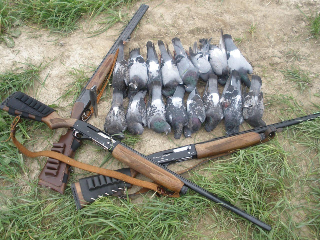 Способи та особливості полювання на голуба і горлицю