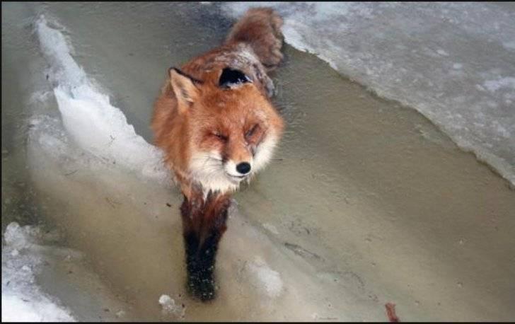 1357936188_frozen_fox_river_photo_04
