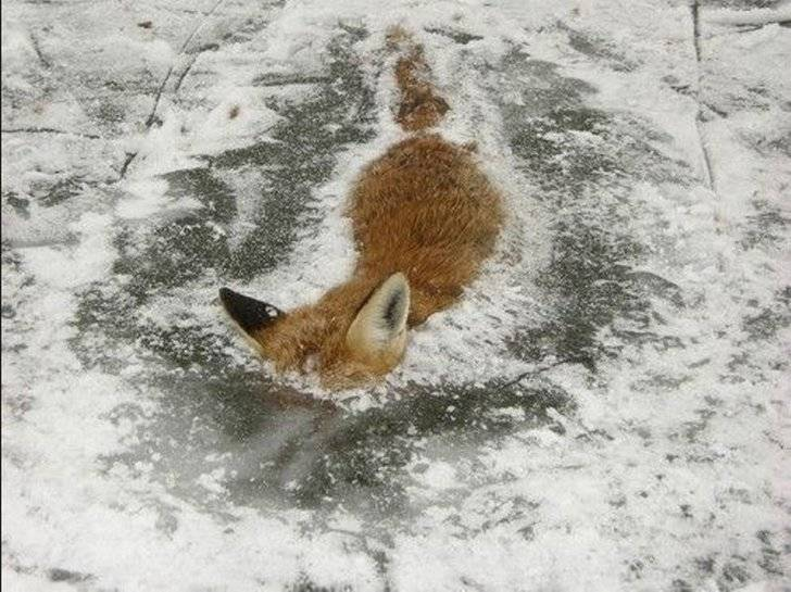 1357936242_frozen_fox_river_photo_06
