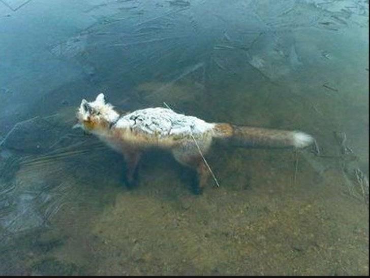 1357936249_frozen_fox_river_photo_01
