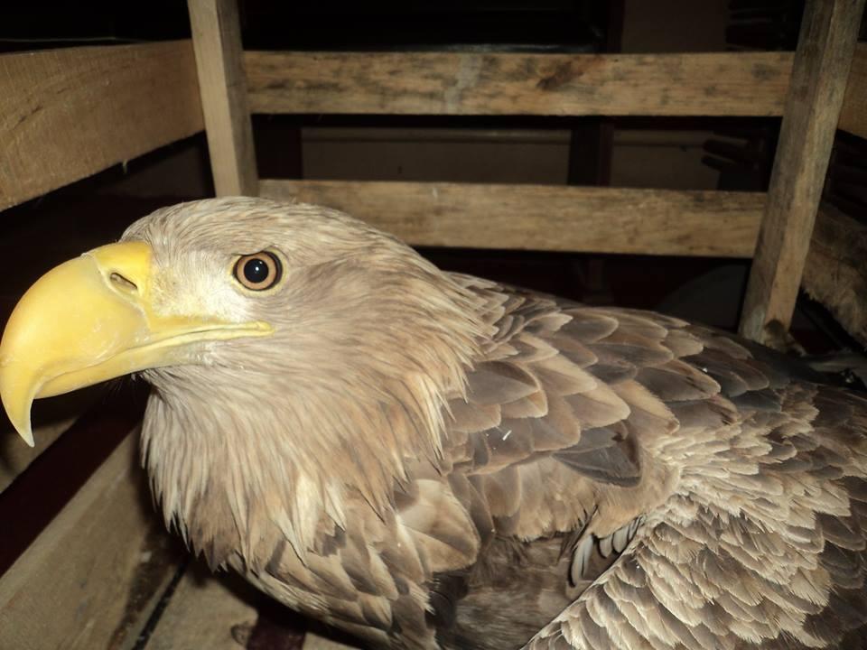 Рідкісний хижий птах може оселитися в Луцькому зоопарку