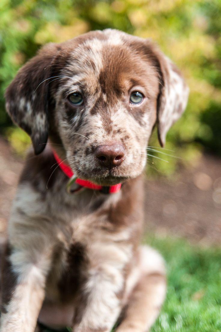 7 характеристик, які впливають на вартість цуценяти мисливської собаки