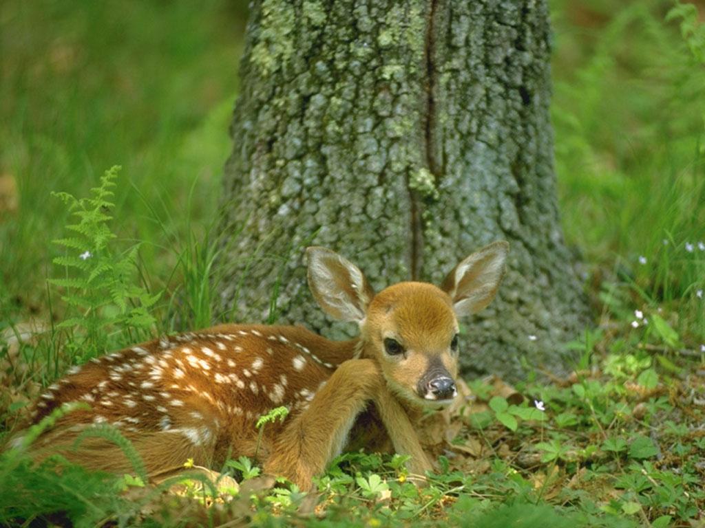 В суботу стартує «сезон тиші» для диких тварин