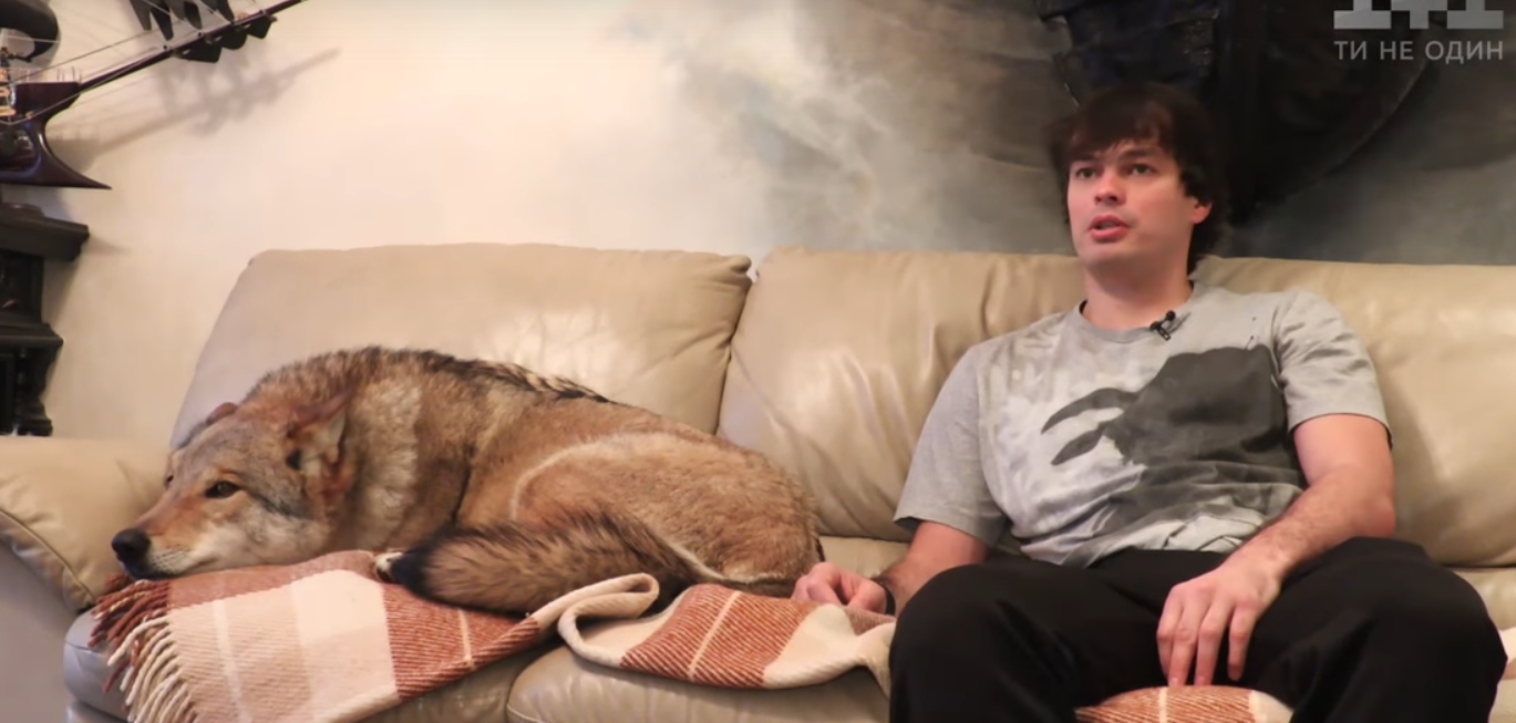 6 років вовк живе в оселі сумчанина