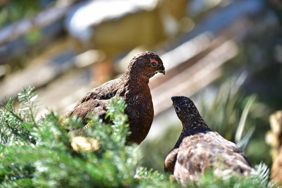 Сьогодні на Закарпатті стартував сезон полювання на пернатих