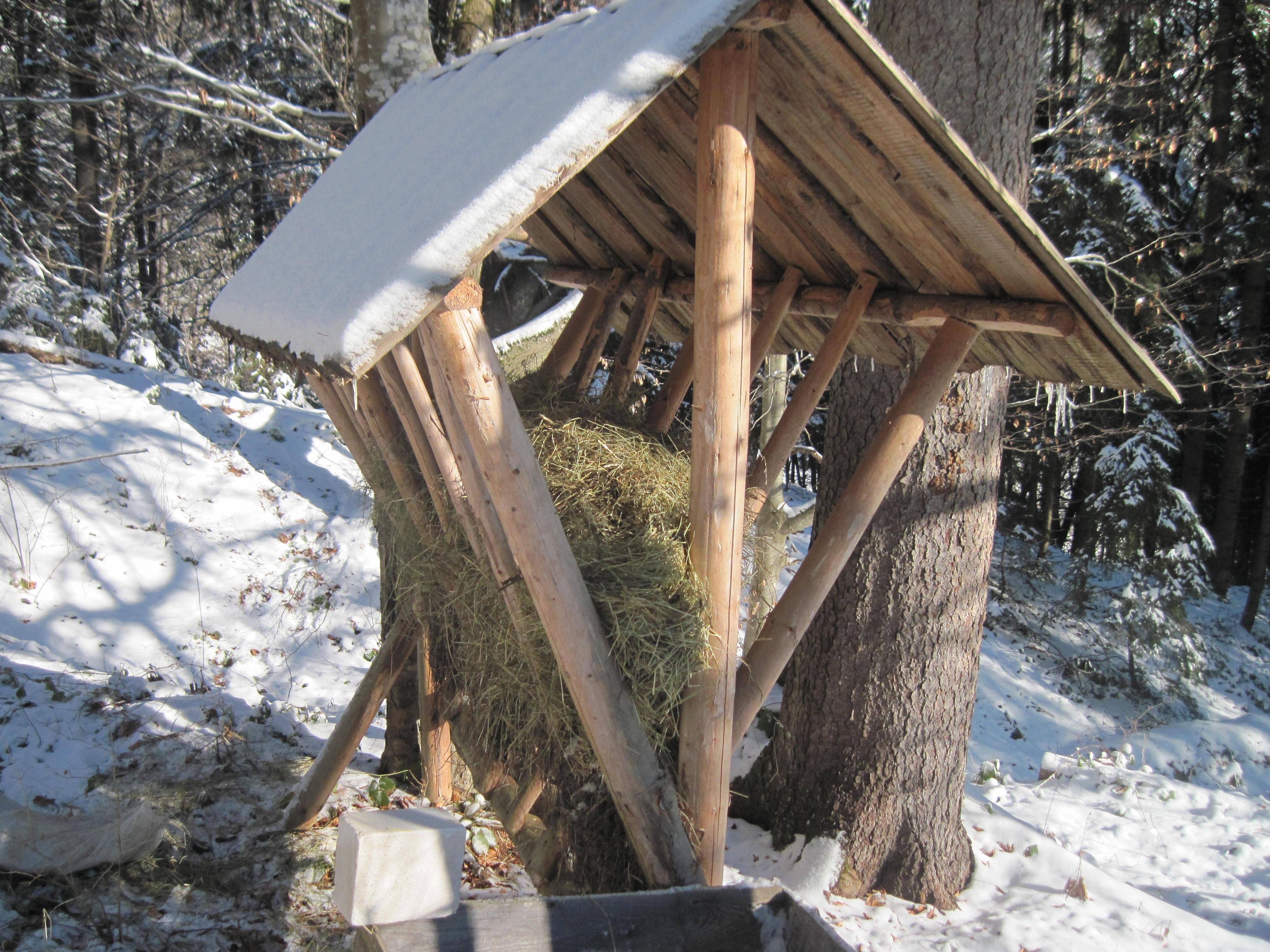 ДП «Брошнівське лісове господарство»: встановлено близько 90 годівниць та 26 підгодівельних майданчиків
