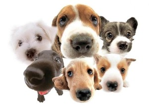 Клички для мисливських собак