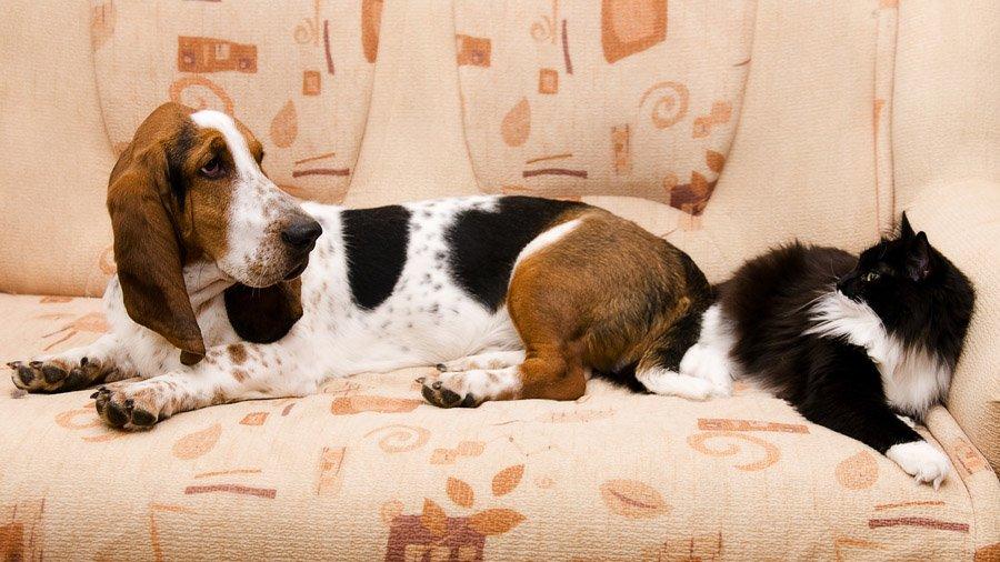 1481393269_basset-hound-dog-photo-1