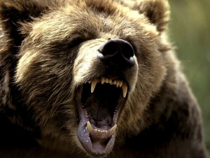 grizzly_growl