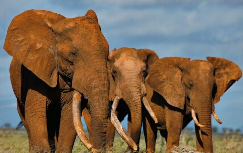 слони 1