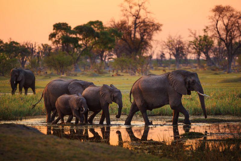 слони 2
