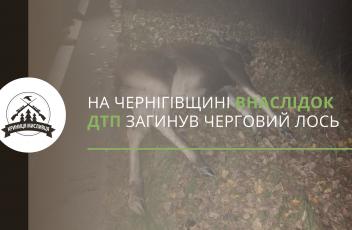 полювання (9)